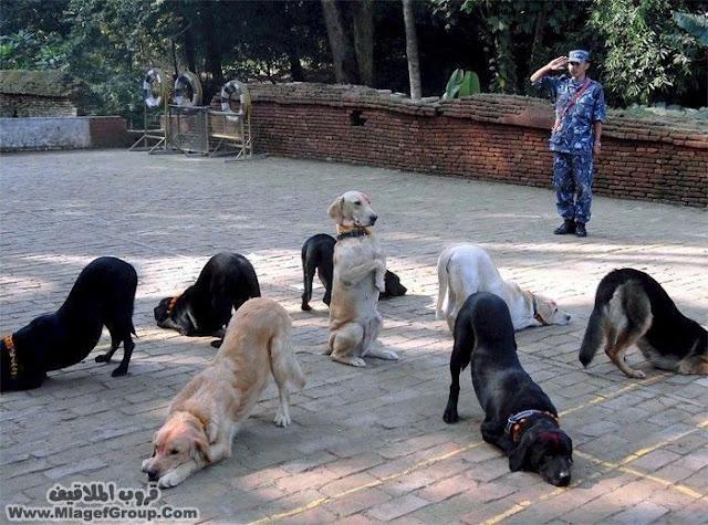 الكلاب اجمل الصور
